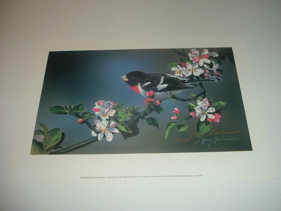 Jerry Gadamus Rose Breasted Grosbeak print 1996 78/85AP Heavy Paper Unframed