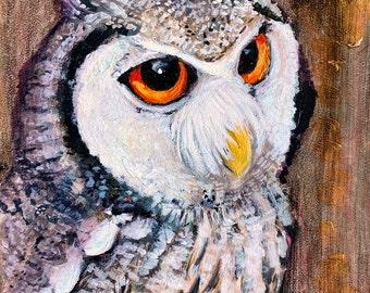 Northern White Faced Owl Original Art on Wood Panel