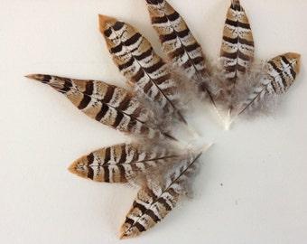 Reeves Pheasant feathers - Köningsfasan  - veren voor Kerstdecoratie - Crafting Featers - 1593