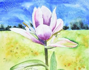 Rosy Paintbrush Original Painting. Indian Paintbrush, Alpine Paintbrush and Wyoming Paintbrush