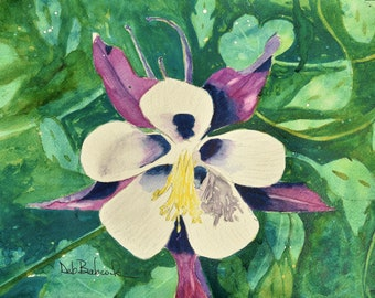 Canvas Print of Colorado Columbine from a Deb Babcock Watercolor Painting