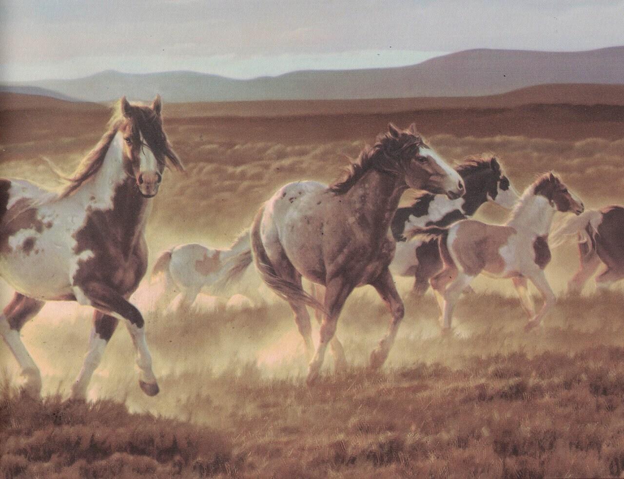 Horses B96510 Wallpaper Border
