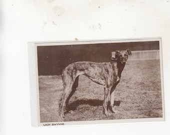 "RPPC Photoographic Postcard C1920-30 Greyhound  Dog""Lady Gwynne"" Posing Great Study-Unused"