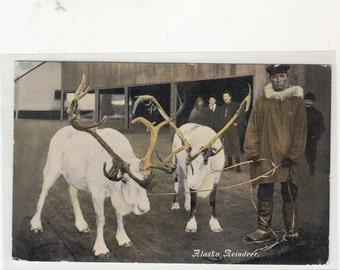 Sepia Tone RPPC Antique Postcards Alaska Reindeer