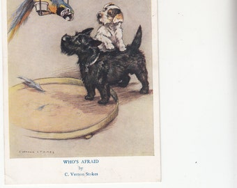 Artist Vernon Stokes,Parrot Snipes On Perch Scotch Terrier And Young Terrier Just Stare Postcard