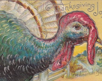 1909 Postcard Thanksgiving Turkey An American Beauty Nicely Embossed