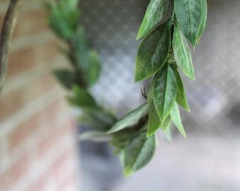 Olive Leaf Crown, tea leaf crown, green leaves crown, eucalyptus crown woodland crown, flower crown, floral crown, olive leaves