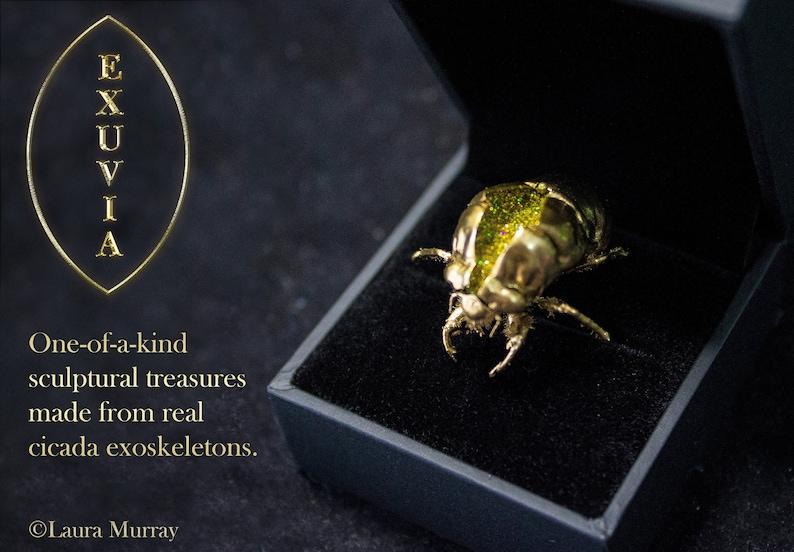 Cicada Exoskeleton Artwork : Exuvia. Unique Jewel made from image 0