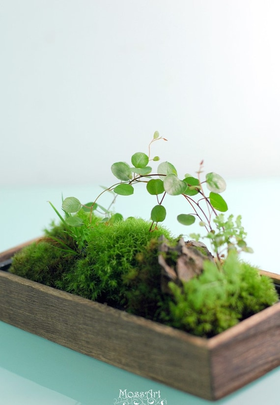 Micro Landscape Tweezers Bonsai Plant Garden Moss DIY Gardening Finishing Tools