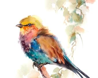 colorful bird art etsy