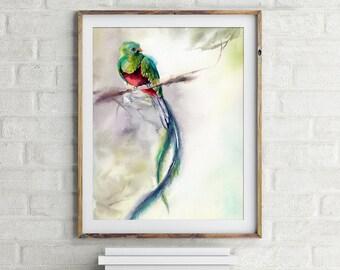 Quetzal Art Print, bird print, watercolor print, bird watercolour painting art, bird art, bird wall print art