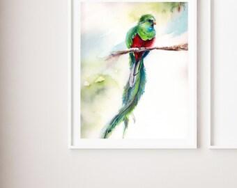 Quetzal Art Print, bird watercolor painting art, bird art, bird wall art print, watercolor print of quetzal bird, bird modern art print