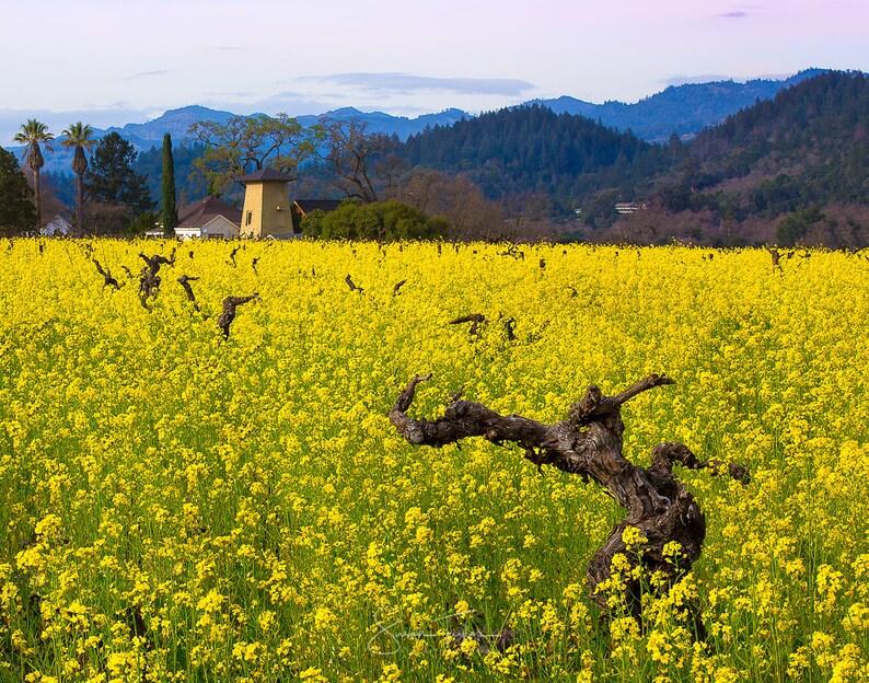 Fiori Gialli Vino.Tela Stampa Grande Vino Valle Di Napa Fiore Giallo Senape Etsy