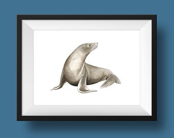 Sea Lion Original Illustration - Ink drawing, painting A5