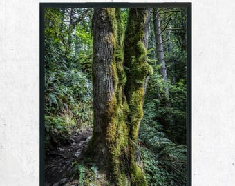 Tree Moss Forest Photography Print, Wall Art