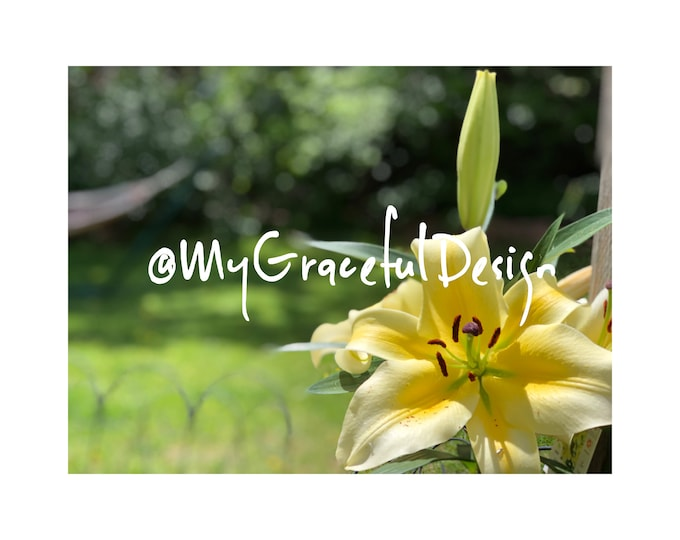 Featured listing image: Downloadable, Garden Photography, Asian Lilies, gardening photography, gardener gift