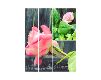 Downloadable, Set of 4 photos of Garden Photography, Pink Roses, gardening photography, gardener gift