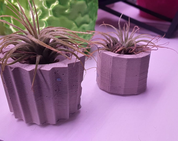 Air Plant with Cement Pots - Set of 2 - 1 Inch - 20mm