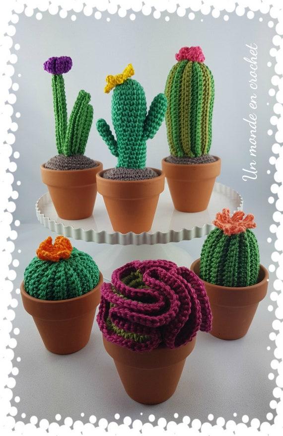 My little cactus (English)