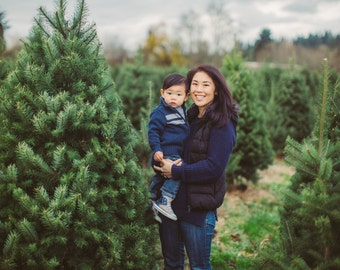 5 Digital Background Backdrop- Photography - Christmas Tree Farm - Newborn, kids, maternity - Instant Download, blurred background