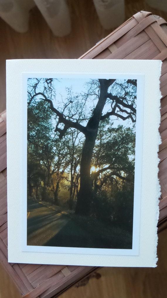 Paso Trees