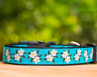 Frangipani Dog Collar / Plumeria Dog Collar / Dog Collars Australia / XS-XL