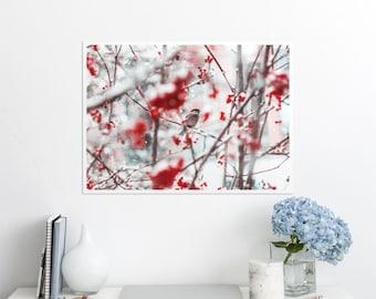 Bird wall art cotton print, Animal lover home decor, Quality paper print, Winter landscape photo prints. UL125