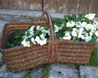 Characterful French antique / vintage very large and heavy wicker gathering basket with bent wood handle.