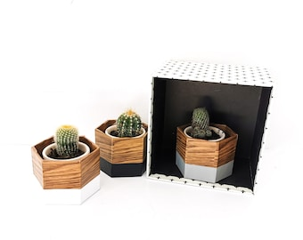 three pot caches MINI GEO oak, black grey and white and cactus - interior decoration - plants - flower pot - Leewalia - green lovers