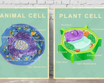 Printable Animal and Plant Cell Posters