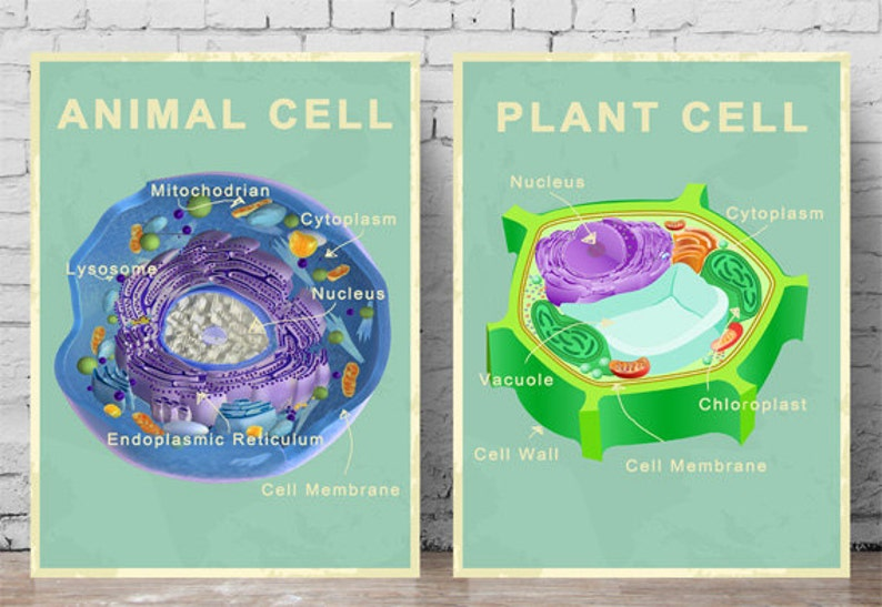 de425c6b4647 Printable Animal and Plant Cell Posters
