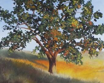 """Fall Oak Tree, Oil Painting on panel, 12"""" x 12"""""""