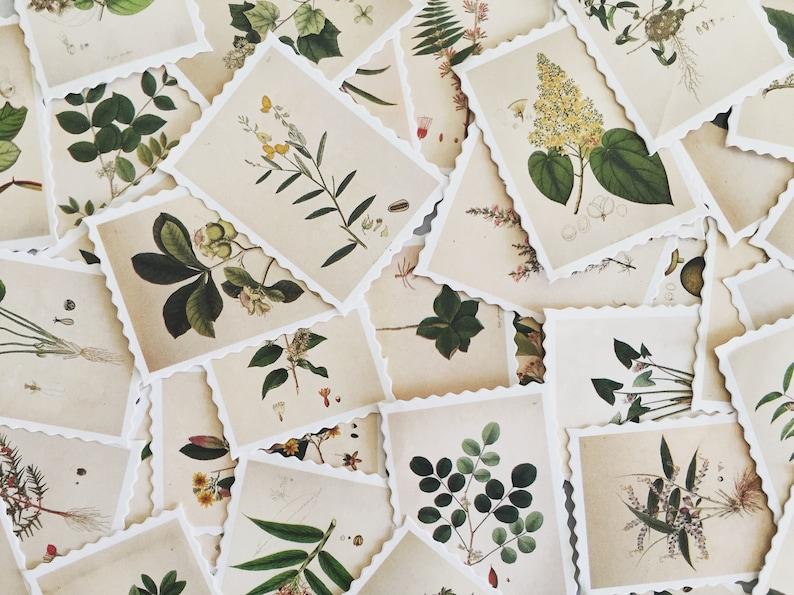 Botanical Illustration Stamp Set Plant Stamp Stickers image 0