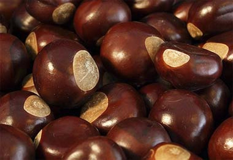 Wild-crafted Buckeyes Assorted sizes image 0