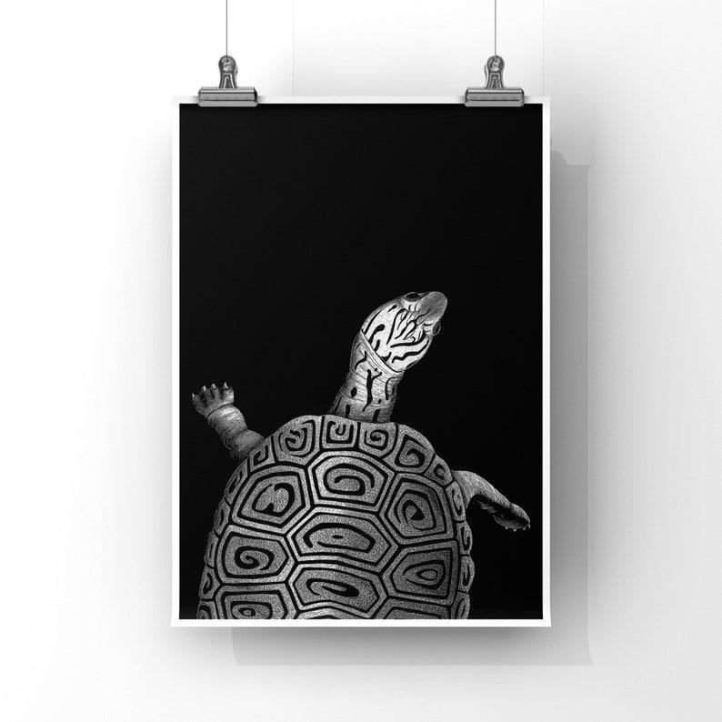 TURTLE  8x10 Art Print image 0