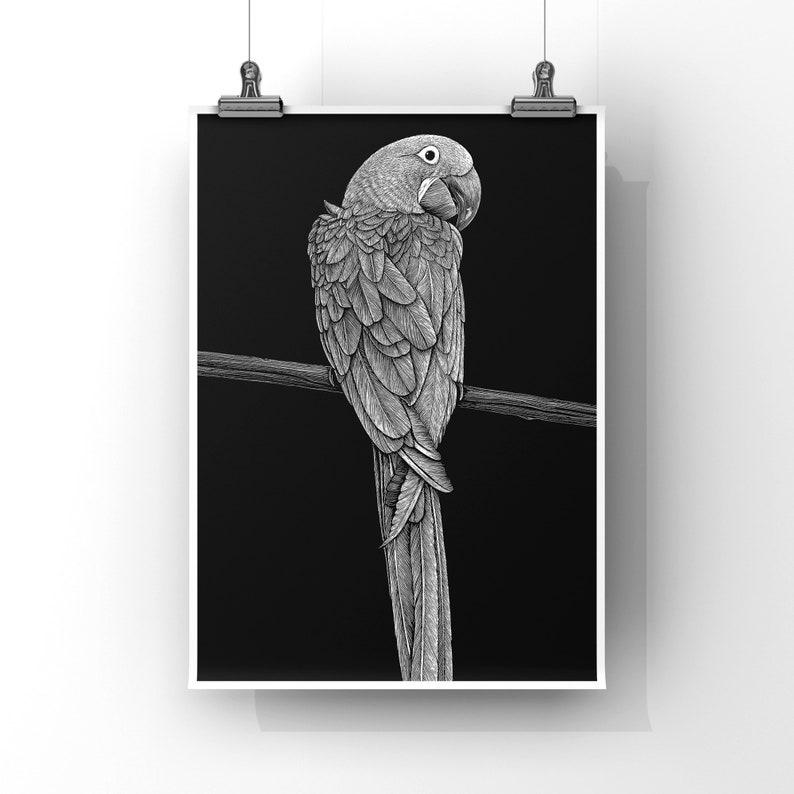 MACAW  8x10 Art Print image 0