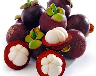2021 Mangosteen Seeds, The Queen of Tropical Fruits, Fresh & Organic, Very Tasty with Medicinal Properties, The Number Two Fruit in Thailand