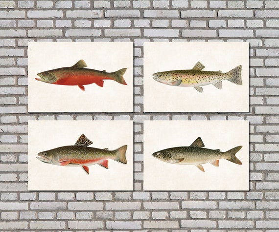 BROWN TROUT Fly Fishing Art Print Picture Present For Trout Angler Fisherman