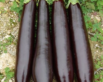 450 x  Eggplant large long black seeds ,  Organic Non-GMO Fresh Seeds From Europe