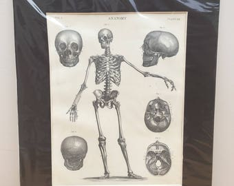 Engraving of Anatomical Study, published circa 1875 | gift, drawing, for doctors, anatomy, picture