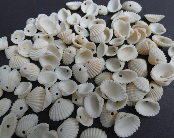 14x18mm Natural Spiral Shell Beads, Drilled Seashells, Sea Shells, Nautical Style, Summer Jewelry Making, Tropical Theme, 10-13x14-18x5-6mm