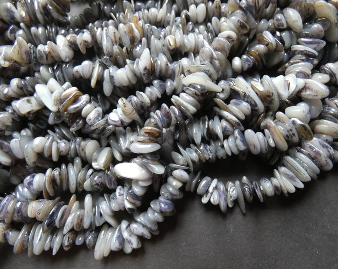 30 Inch 8-28mm Natural Freshwater Shell Bead Strand, Dyed, About 340-380 Beads, Dark Gray, Shell Nuggets & Chips, Drilled Seashell Bead