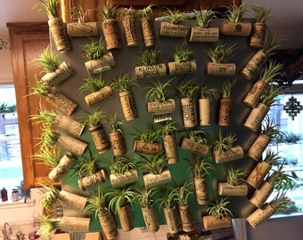 Airplant Cork Magnets - 3 pack