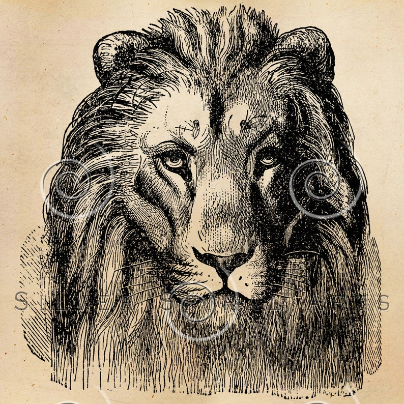 image regarding Printable Pictures of Lions named Typical Lion Mind Example Printable Lions 1800s Antique Animal Print Prompt Down load Electronic Graphic Retro Black White Drawing