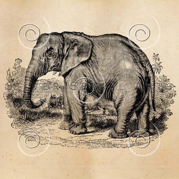 Vintage Elephant Illustration Printable Elephants 1800s | Etsy Vintage Elephant Illustration