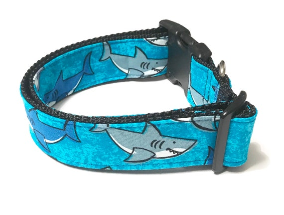 Requin bleu large collier de chien