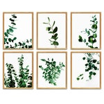 Eucalyptus Leaves Print, Eucalyptus Print Set Of 6, Botanical Wall Art Set Of 6 Prints, Printable Wall Art, Wall Gallery Set, Botanical Art