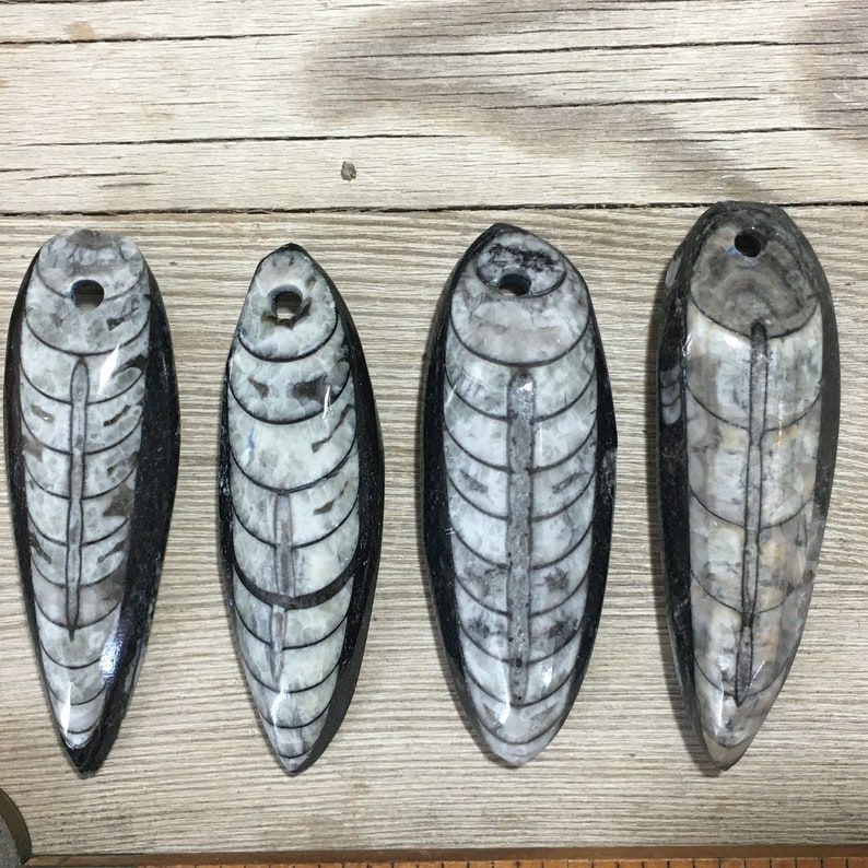 4 Orthoceras Pendants Polished Drilled Squid Large Black Stone Focal Pendant Fossil Beads Nature jewelry Fossil pendant Fossil Sea Life