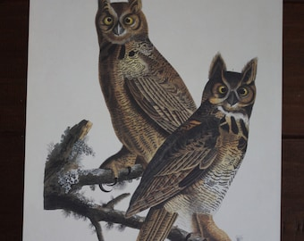 Great Horned Owl John James Audubon Art Plate 61 to Frame or for Collage, Scrapbooking, Paper Arts, Assemblage and MORE