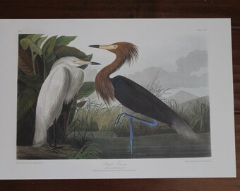 Purple Heron John James Audubon Art Plate CCLVI to Frame or for Collage, Scrapbooking, Paper Arts, Assemblage and MORE